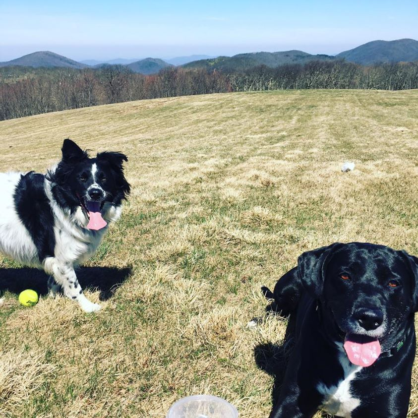 Max Patch Mountain Bald Dogs